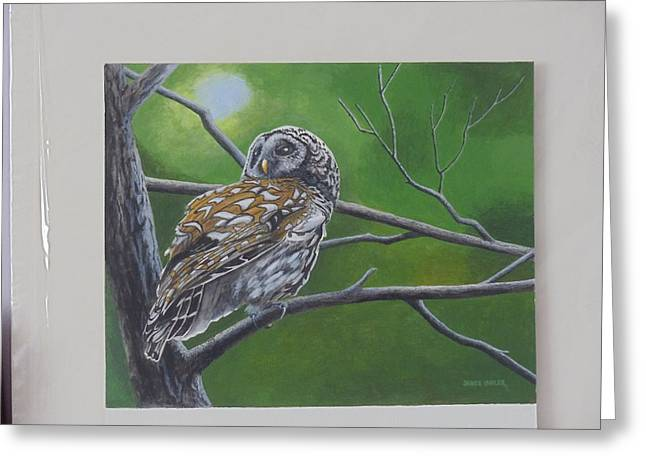 Barred Owl Greeting Card by James Lawler