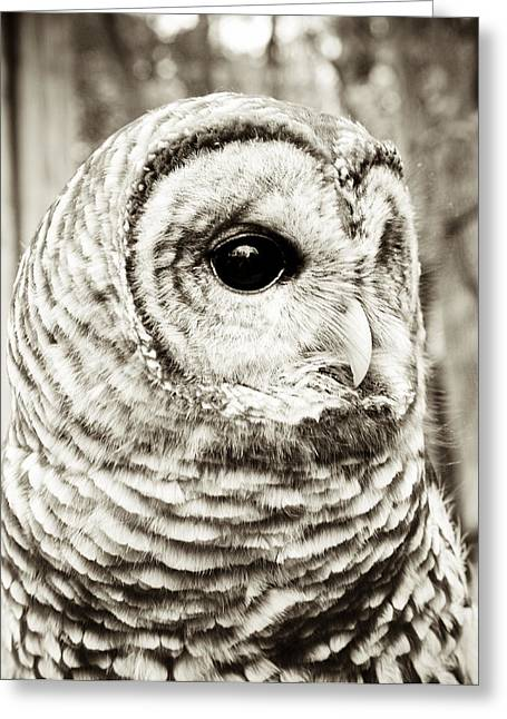 Barred Owl Greeting Card by Olivia StClaire