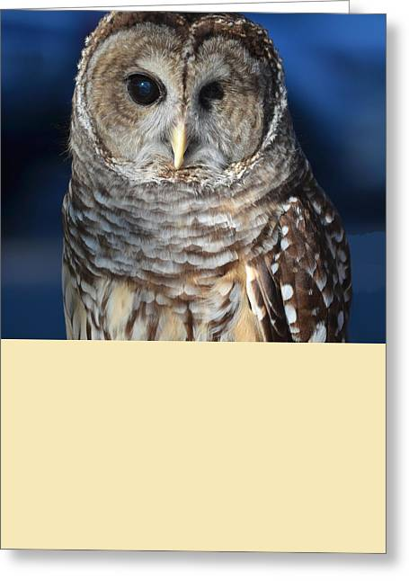 Barred Owl Greeting Card by John Latham