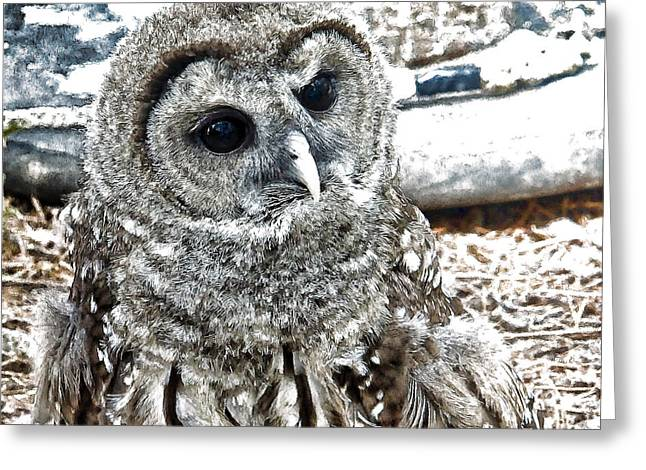 Greeting Card featuring the photograph Barred Owl Photo Art by Constantine Gregory