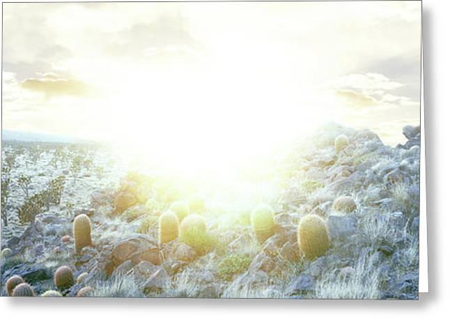 Barrel Cactus And Joshua Trees Greeting Card