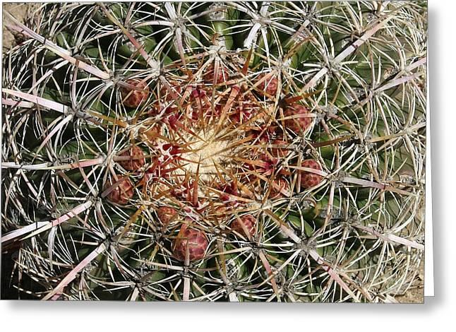 Barrel Cactus Greeting Card by Ellen Henneke