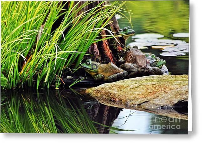 Basking Bullfrogs Greeting Card