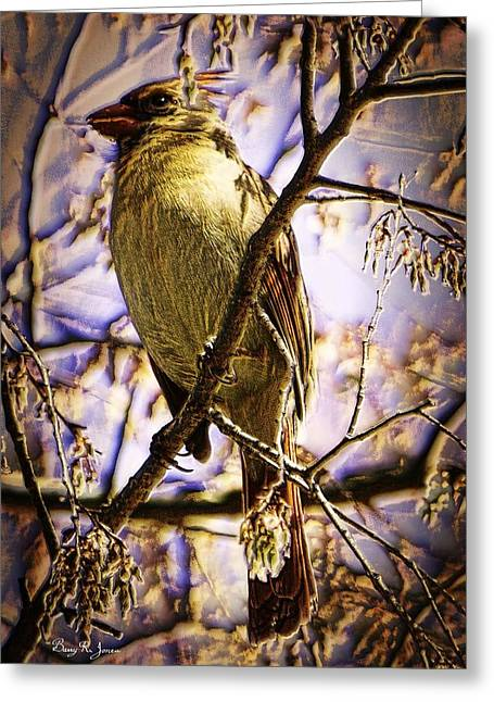 Basking In The Glow Greeting Card by Barry Jones