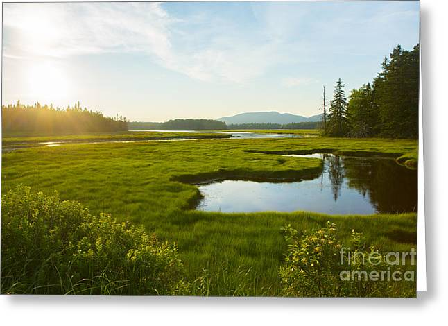 Bass Harbor Marsh At Dusk Greeting Card by Diane Diederich