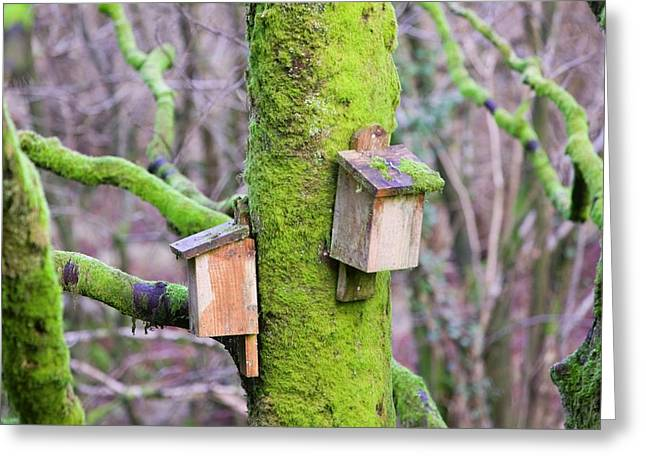Bat Boxes In The Forest Of Bowland Greeting Card by Ashley Cooper