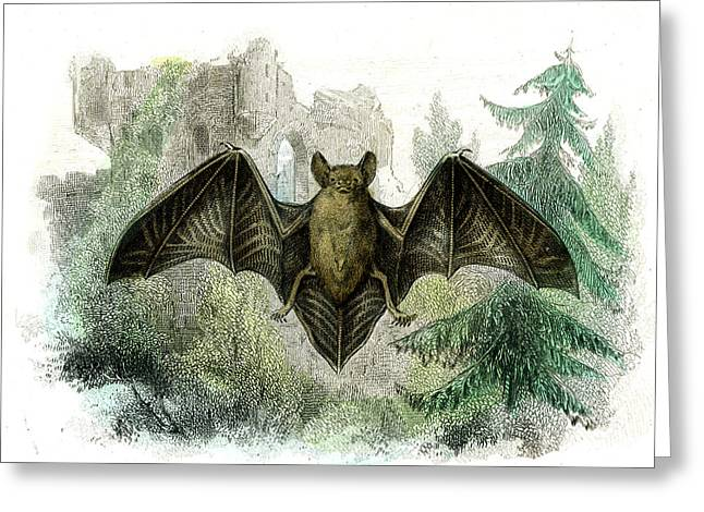 Bat Greeting Card by Collection Abecasis