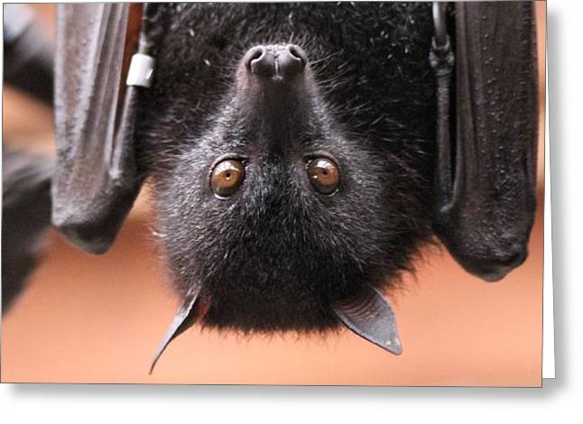 Bat Eyes Greeting Card by Dan Sproul