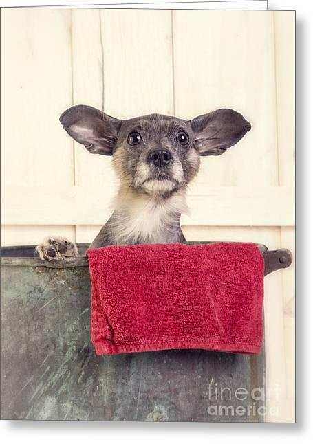 Bathtime Greeting Card