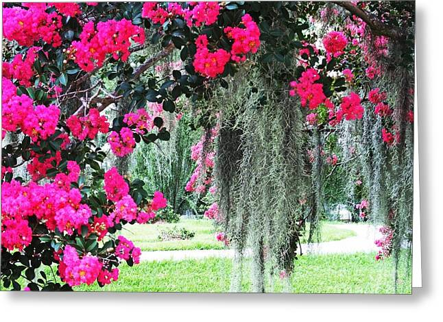 Baton Rouge Louisiana Crepe Myrtle And Moss At Capitol Park Greeting Card