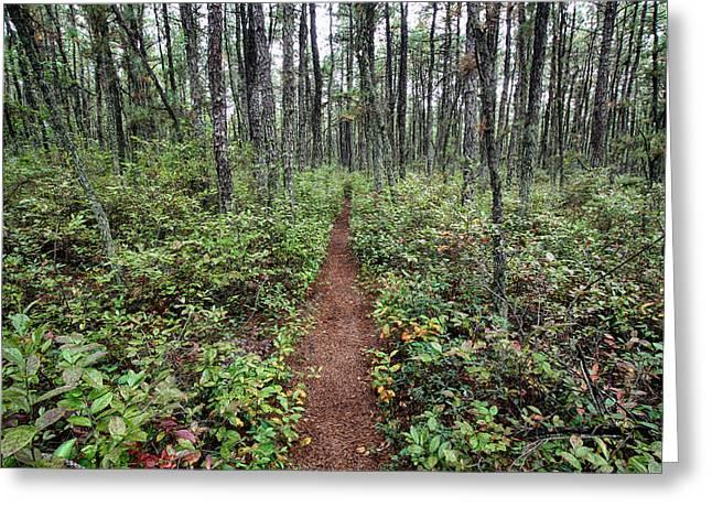 Batona Trail Greeting Card by Dawn J Benko