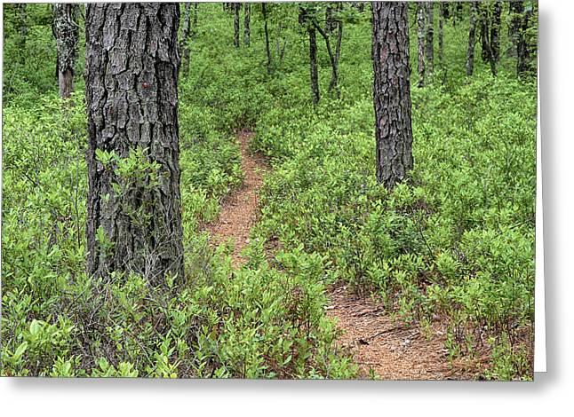 Batona Trail II Greeting Card
