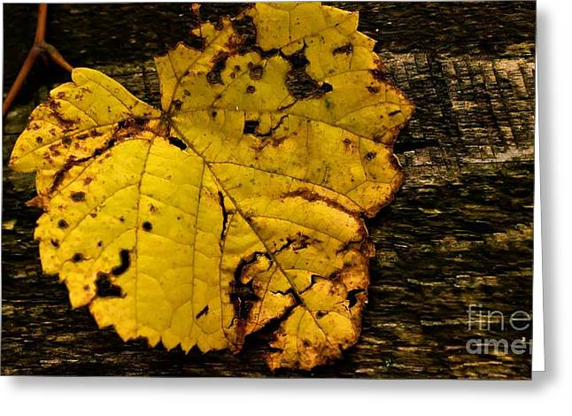 Greeting Card featuring the photograph Battered Autumn Beauty by Julie Clements