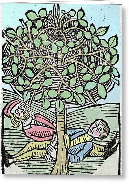 Bausor Tree Greeting Card by Paul D Stewart