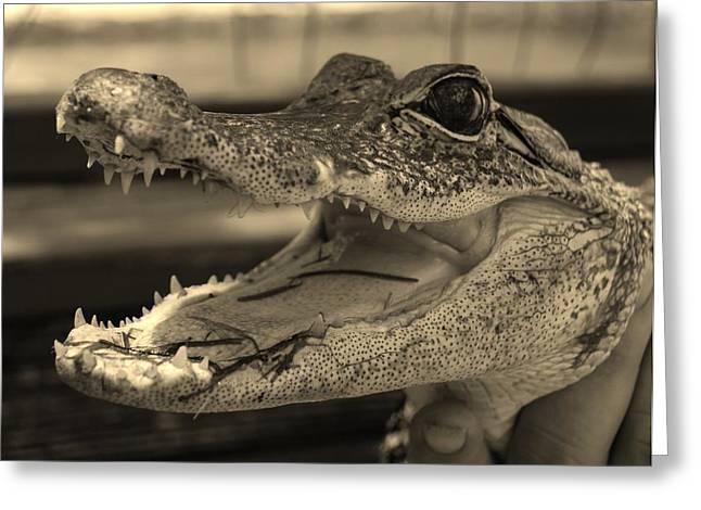 Baby Gator Dark Sepia Greeting Card by Rob Hans