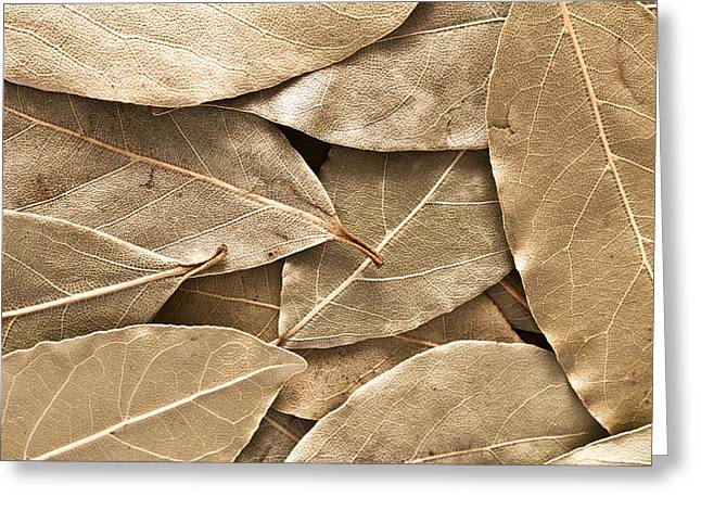 Bay Leaves Greeting Card by Tom Gowanlock