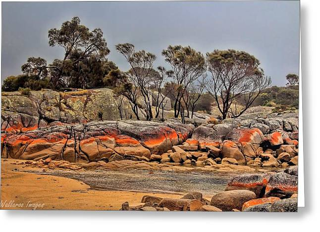 Greeting Card featuring the photograph Bay Of Fires 2 by Wallaroo Images