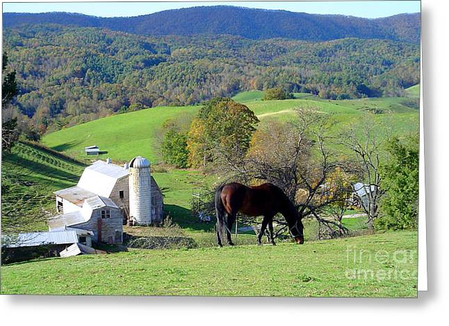 Bay On The Hill Greeting Card by Annlynn Ward