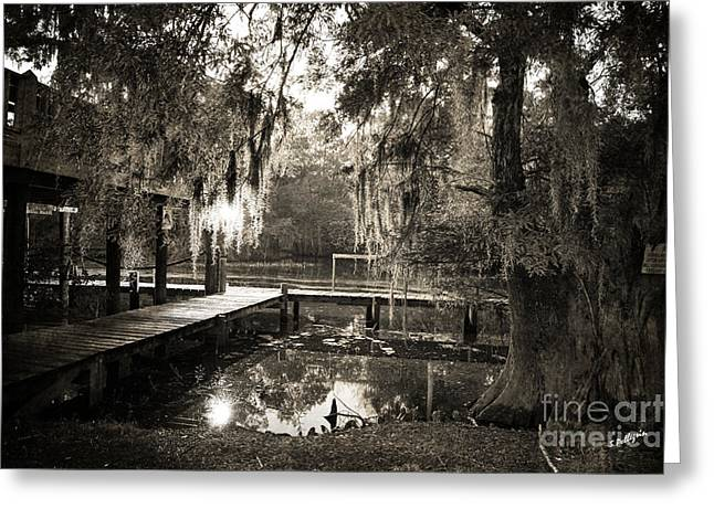 Bayou Evening Greeting Card by Scott Pellegrin