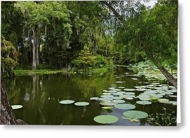 Greeting Card featuring the photograph Bayou Lushness by Rhonda McDougall