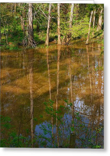 Bayou Reflections Greeting Card by Connie Fox