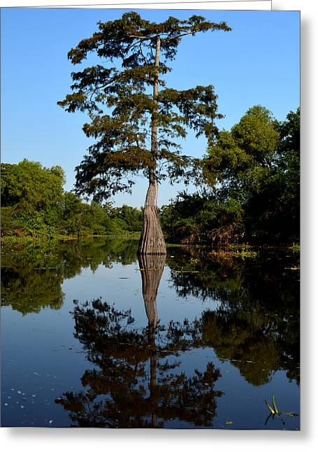 Bayou Reflections Greeting Card by Maggy Marsh