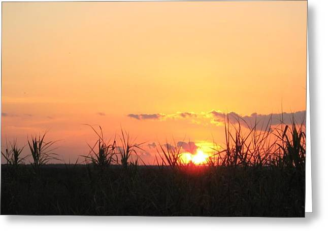 Greeting Card featuring the photograph Bayou Sunset by John Glass