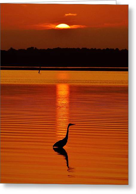 Bayside Ripples - A Heron Takes An Evening Stroll As The Sun Sets Behind The Clouds On The Bay Greeting Card