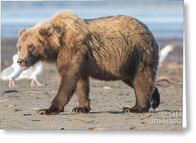 Beach Bear Greeting Card
