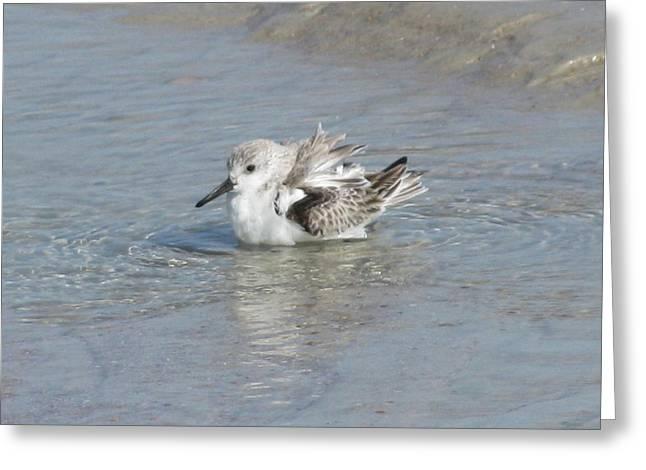 Beach Bird Bath 4 Greeting Card