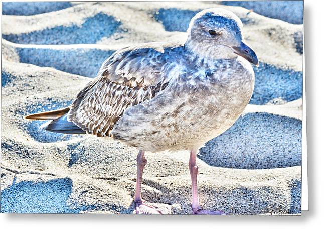 Beach Bird Greeting Card
