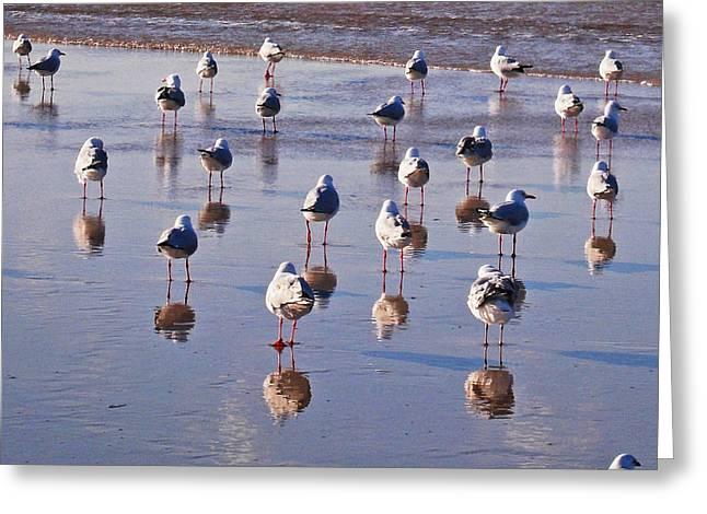 Greeting Card featuring the photograph Beach Birds 3 by Ankya Klay