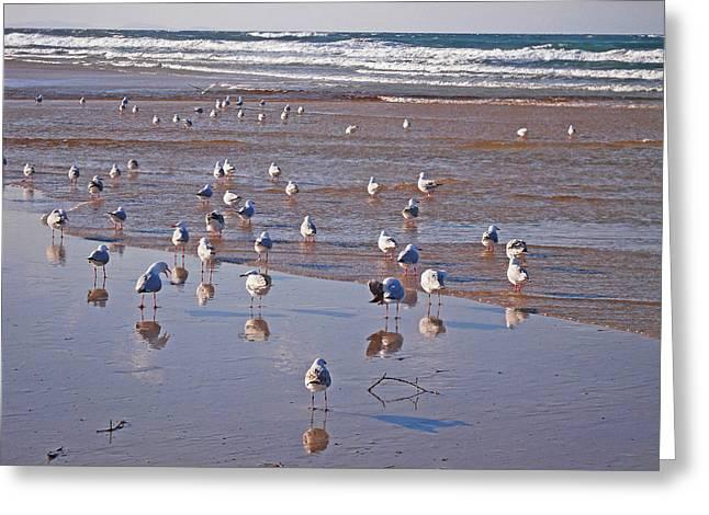 Greeting Card featuring the photograph Beach Birds 4 by Ankya Klay