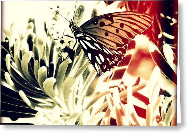 Beach Butterfly I Sunset Greeting Card