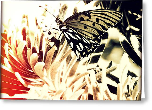 Beach Butterfly II Sunset Greeting Card