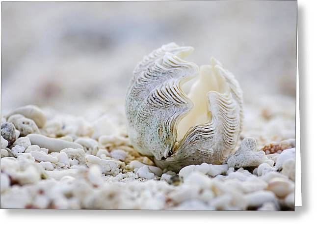 Beach Clam Greeting Card by Sean Davey