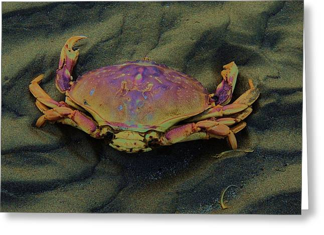 Beach Crab Greeting Card by Helen Carson