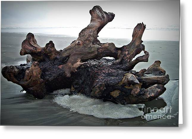 Beach Driftwood In Color Greeting Card
