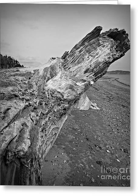 Beach Driftwood View Greeting Card