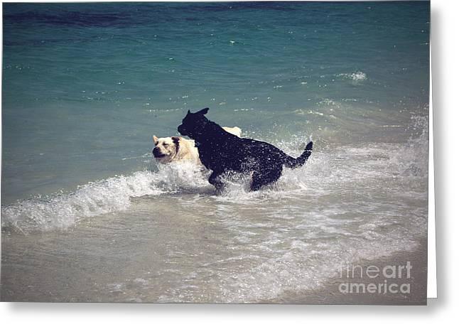 Beach Fun Greeting Card by Cassandra Buckley
