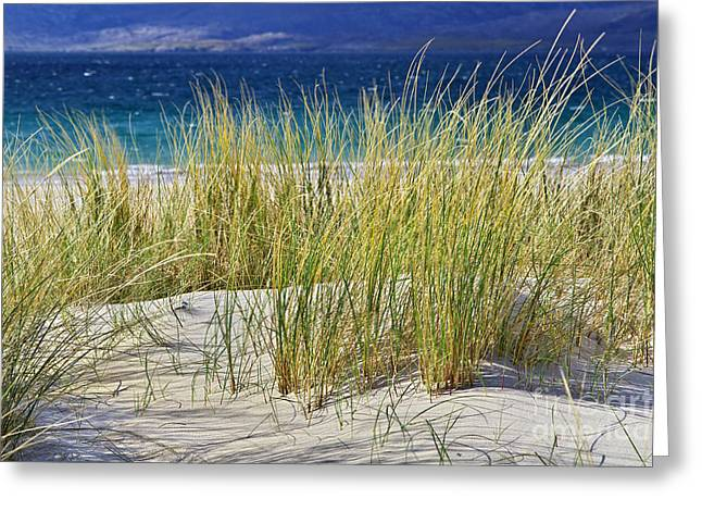 Beach Gras Greeting Card