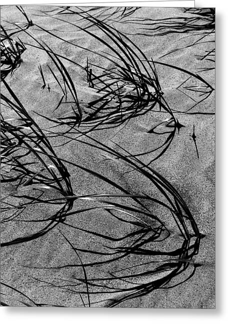 Beach Grass Black And White Greeting Card by Mary Bedy