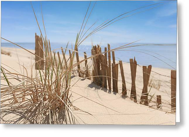 Beach Grass II Greeting Card by Dapixara Art
