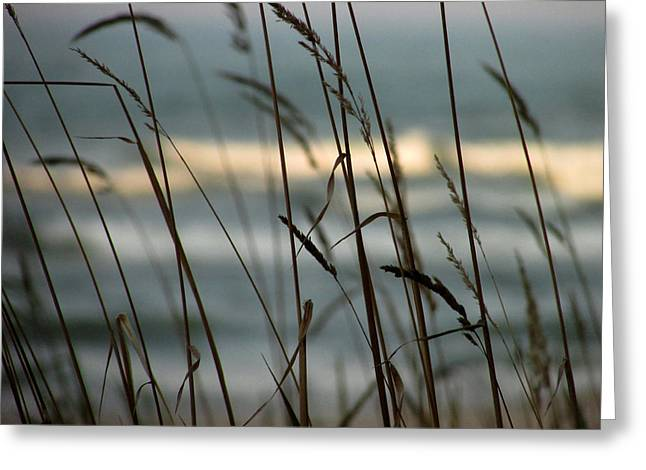 Greeting Card featuring the photograph Beach Grass by Kimberly Mackowski