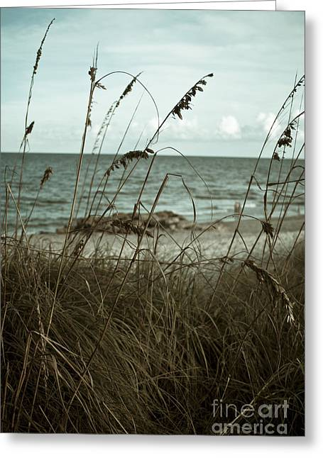 Beach Grass Oats Greeting Card