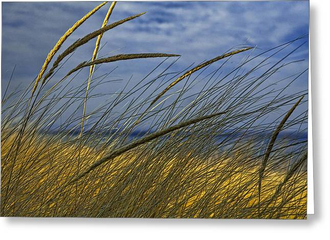Beach Grass On A Sand Dune At Glen Arbor Michigan Greeting Card by Randall Nyhof