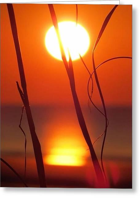 Beach Grass Sunrise Greeting Card