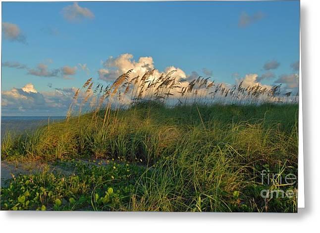 Beach Greenery Panorama Greeting Card by Bob Sample