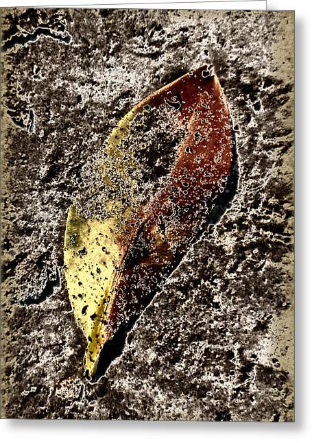 Beach Leaf Greeting Card by Geraldine Alexander