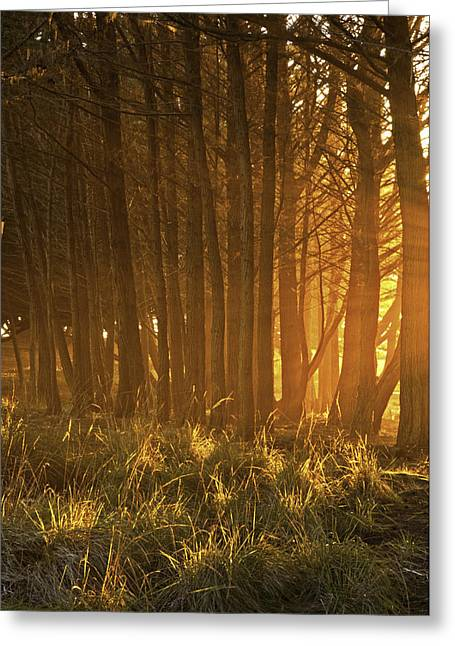 Beach Light Through The Trees Greeting Card by Judi Baker